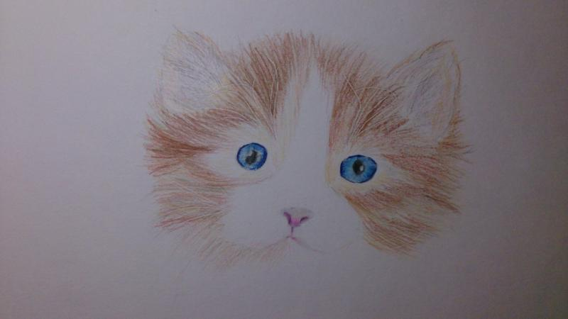 Рисуем пушистого котенка цветными карандашами - шаг 6