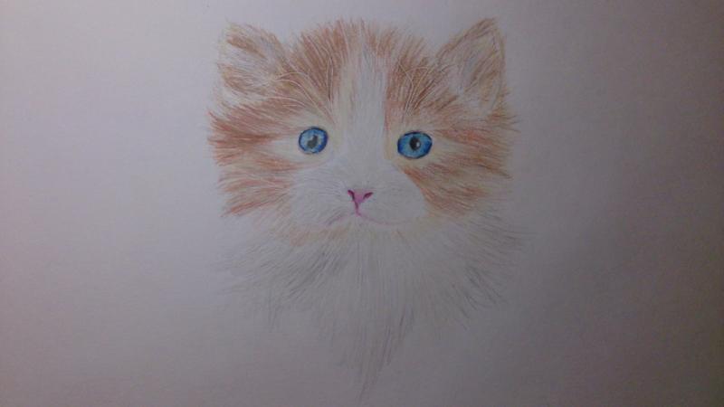 Рисуем пушистого котенка цветными карандашами - шаг 8