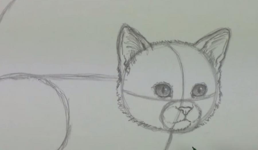Рисуем пушистого котенка простым - шаг 4