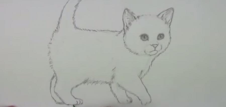 Рисуем пушистого котенка простым - шаг 5