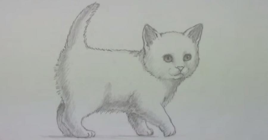 Рисуем пушистого котенка простым - шаг 6