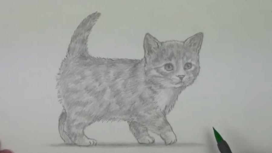 Рисуем пушистого котенка простым - шаг 7