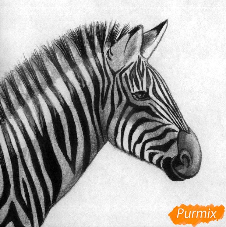 Рисуем реалистичную голову зебры  и ручкой - шаг 4