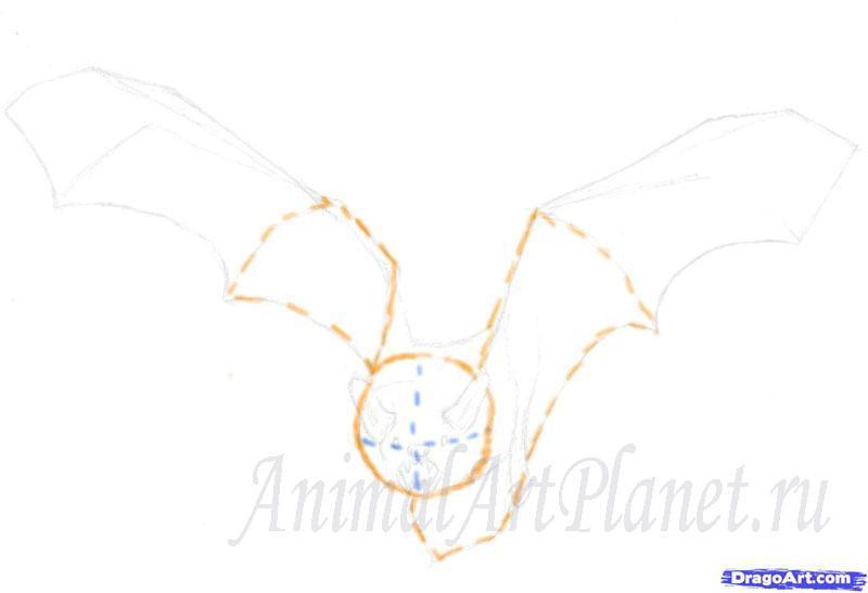 Рисуем реалистичную летучую мышь - шаг 1