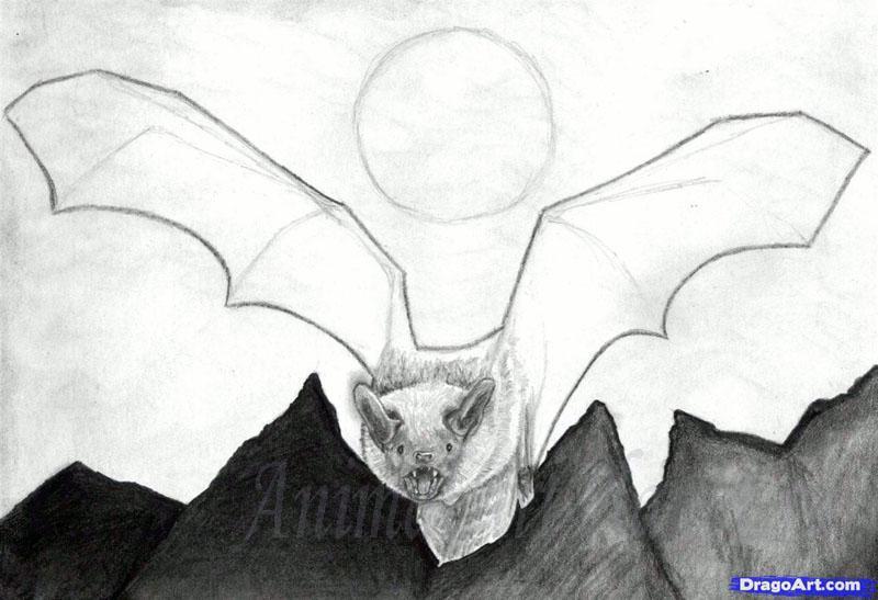 Рисуем реалистичную летучую мышь - шаг 10
