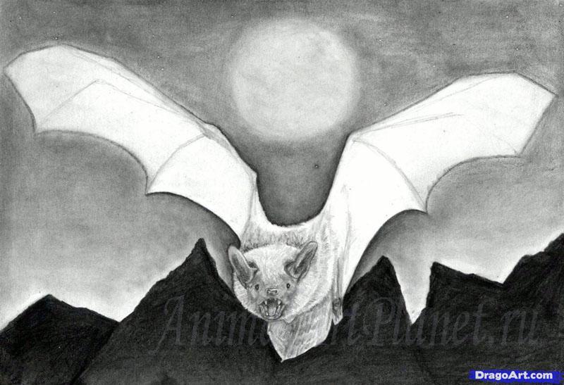Рисуем реалистичную летучую мышь - шаг 12