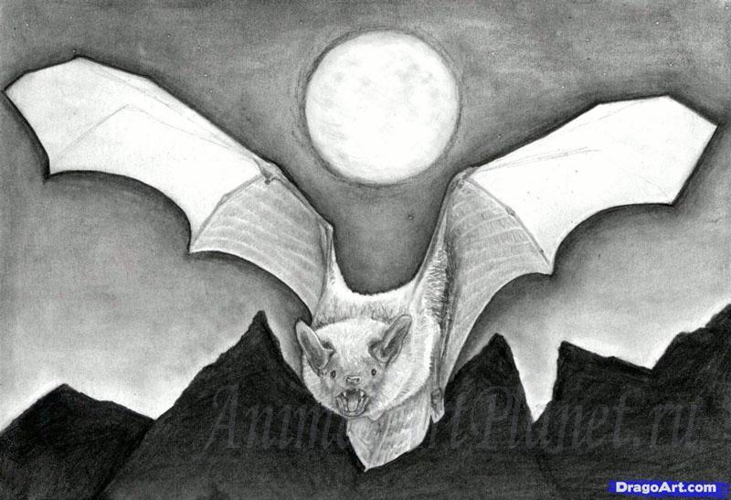 Рисуем реалистичную летучую мышь - шаг 14