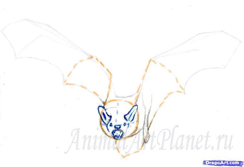 Рисуем реалистичную летучую мышь - шаг 2