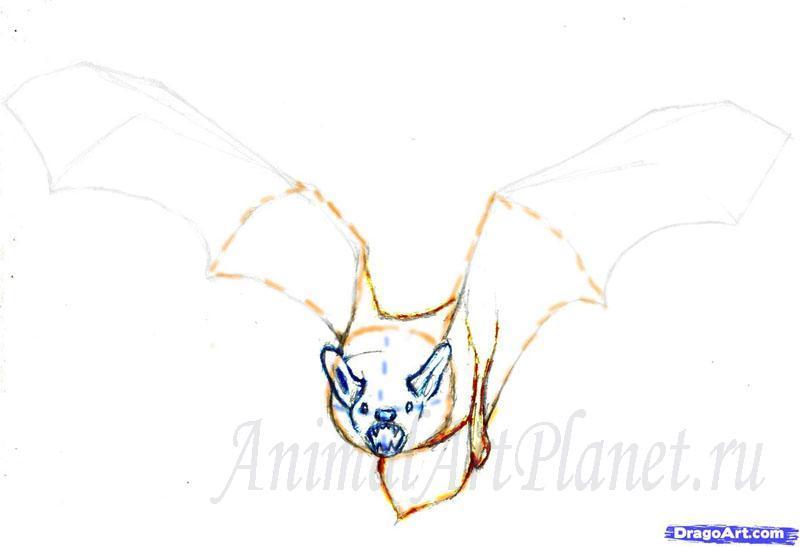Рисуем реалистичную летучую мышь - шаг 3
