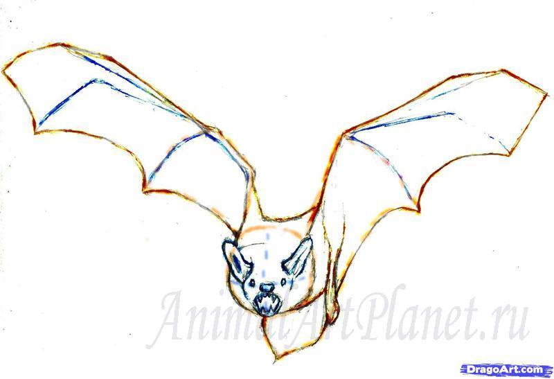 Рисуем реалистичную летучую мышь - шаг 4