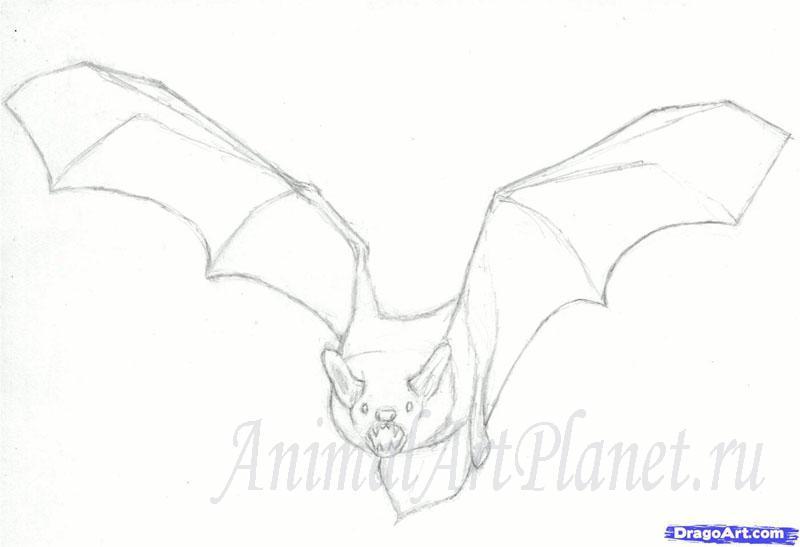Рисуем реалистичную летучую мышь - шаг 5