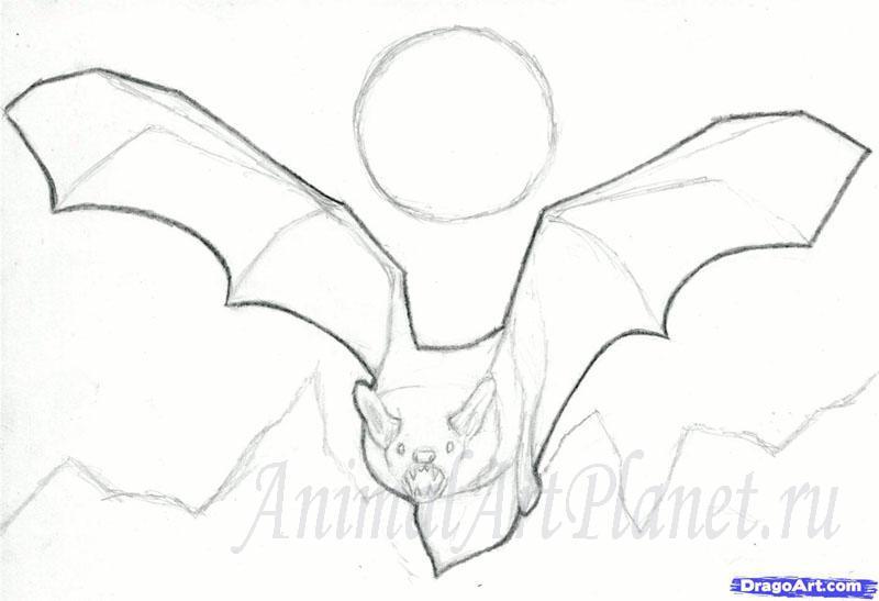 Рисуем реалистичную летучую мышь - шаг 6