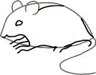 Рисуем серую мышку - шаг 2