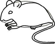 Рисуем серую мышку - шаг 3