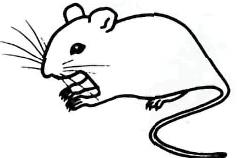 Рисуем серую мышку - шаг 4