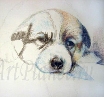 Рисуем щенка цветными карандашами - шаг 2