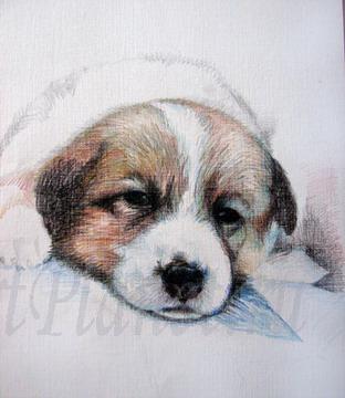 Рисуем щенка цветными карандашами - шаг 3