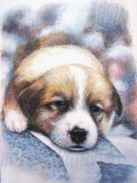 Рисуем щенка цветными карандашами - шаг 5