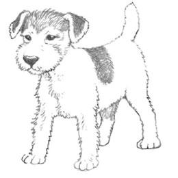 Рисуем щенка карандашами - шаг 4