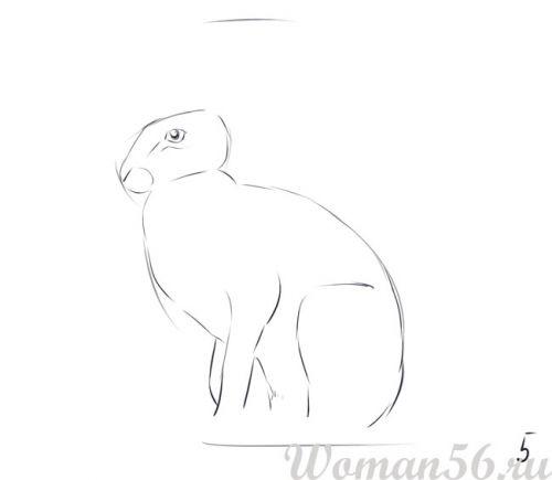 Рисуем сидящего зайца - шаг 5