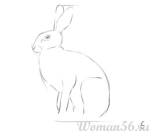 Рисуем сидящего зайца - шаг 6