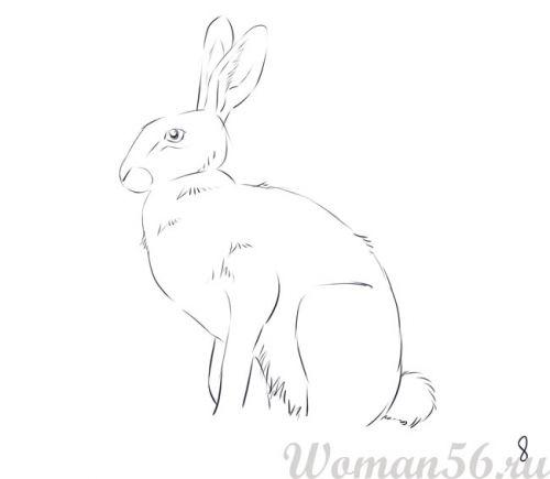 Рисуем сидящего зайца - шаг 8