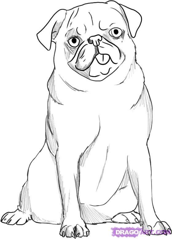 спешишь картинки как нарисовать собаку мопса строительстве главный упор
