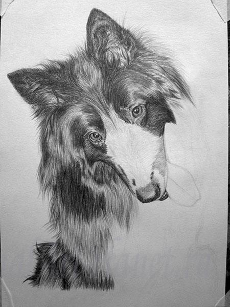 Рисуем собаку породы грюнендаль
