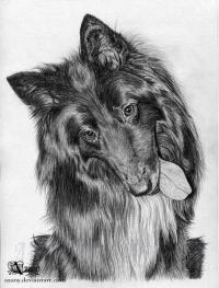 собаку породы грюнендаль карандашом