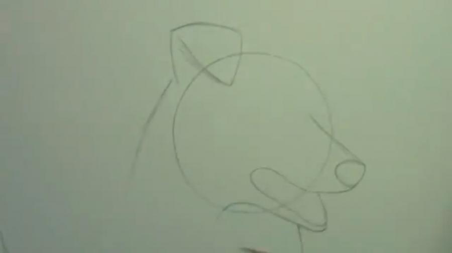 Рисуем собаку породы Шелти - шаг 2