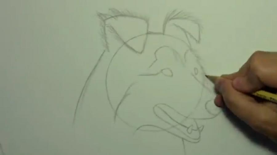 Рисуем собаку породы Шелти - шаг 4