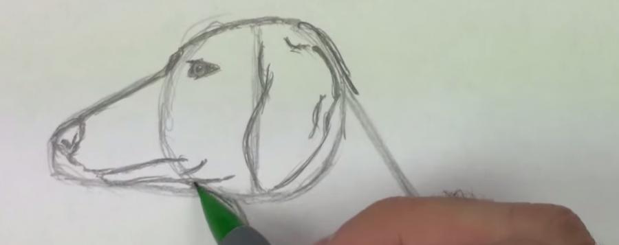 Рисуем собаку таксу карандашами - шаг 3
