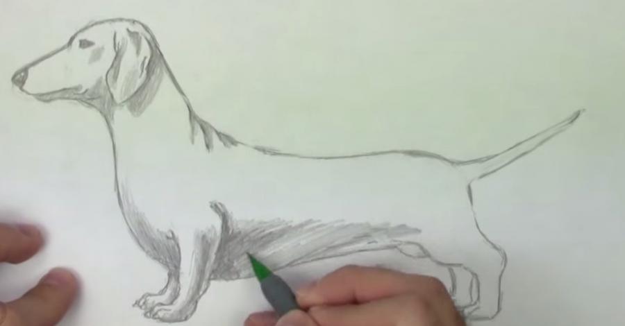 Рисуем собаку таксу карандашами - шаг 5