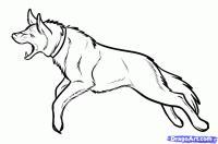 Фото собаку в беге карандашом