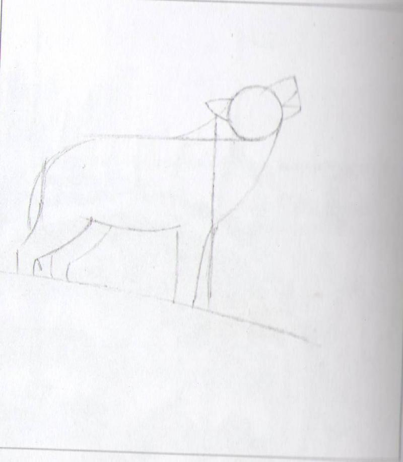 Рисуем воющего волка - шаг 2