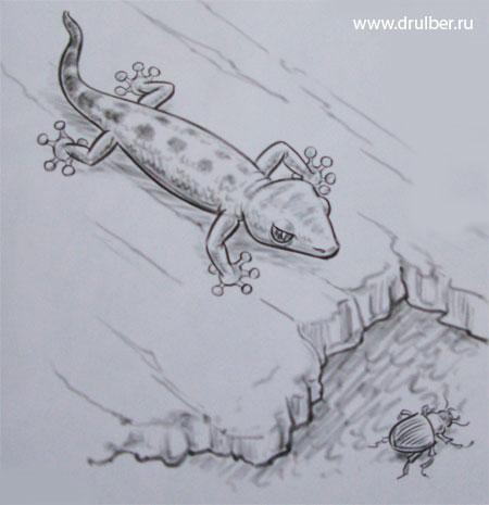 Как легко нарисовать ящерицу - шаг 4