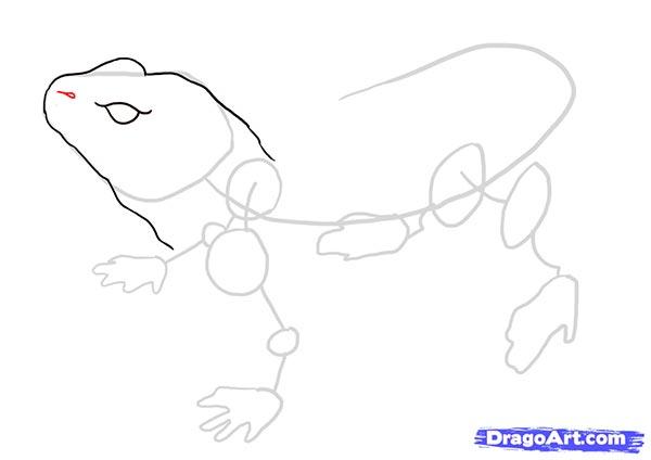 Рисуем ящерицу   для начинающих - шаг 4