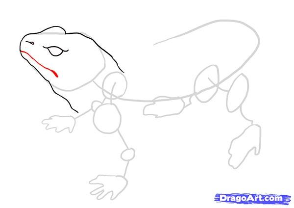 Рисуем ящерицу   для начинающих - шаг 5