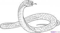 Фото змею Черная Мамба