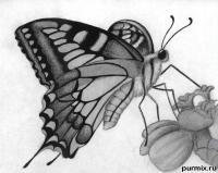 бабочку на цветке карандашами