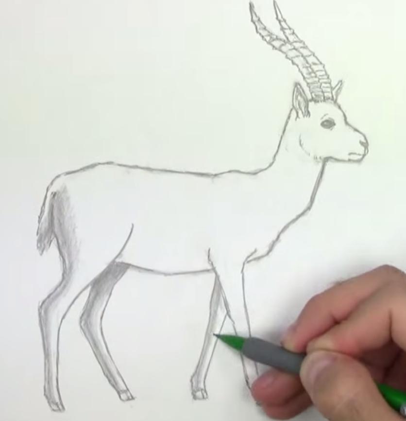 Как животное газель в полный рост - шаг 5