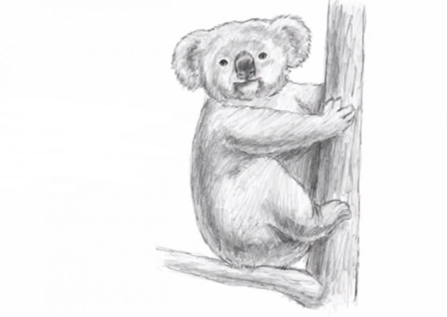 Рисуем коалу   для начинающих - шаг 6