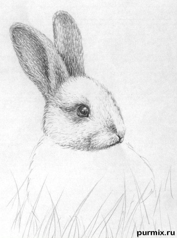 Рисуем кролика в траве - шаг 3