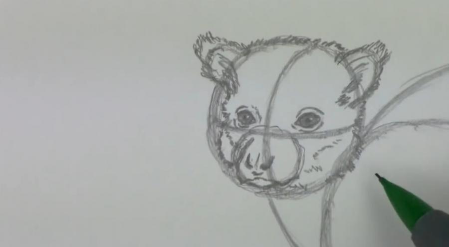 Рисуем лемура - шаг 3
