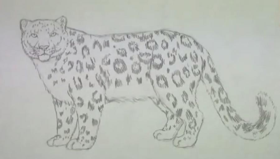 Рисуем леопарда - шаг 5