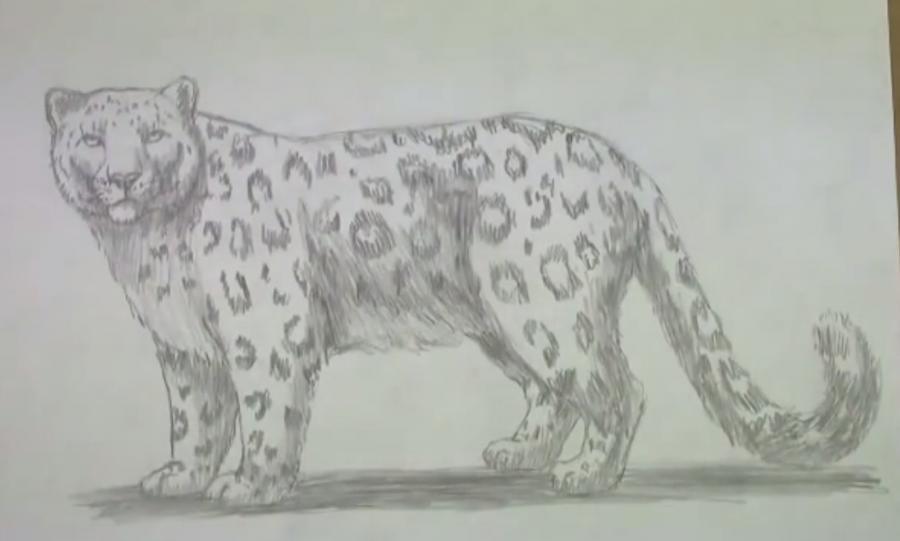 Рисуем леопарда - шаг 6