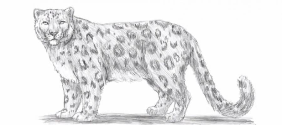 Рисуем леопарда - шаг 7