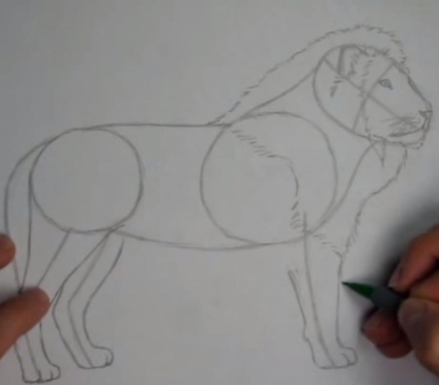 Рисуем льва в полный рост - шаг 4