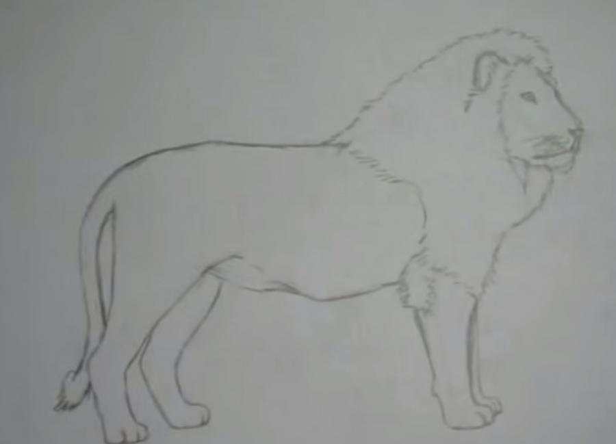 Рисуем льва в полный рост - шаг 5