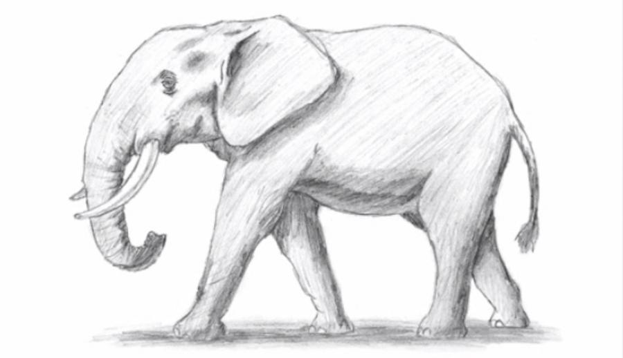 Как просто нарисовать слона - шаг 6